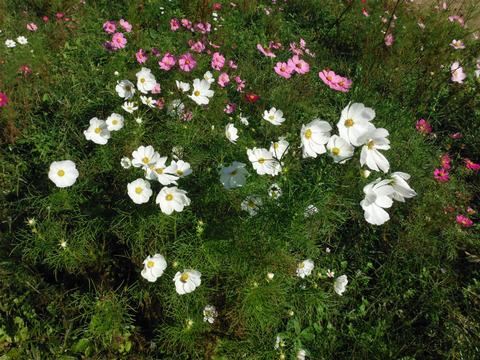 花の国 040