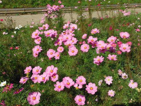 花の国 039