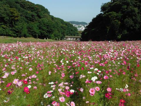 花の国 033