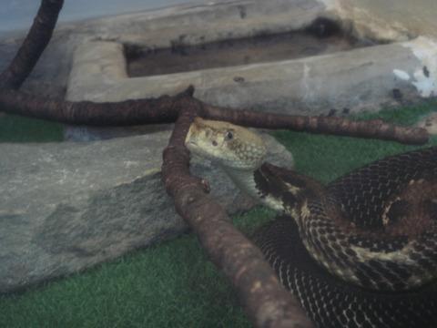 20110918-snakecenter07