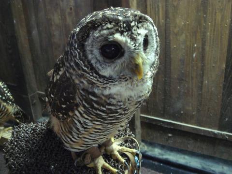20110808-owl05