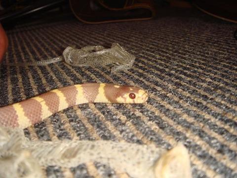 20100912-snake7