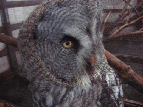 20110808-owl02