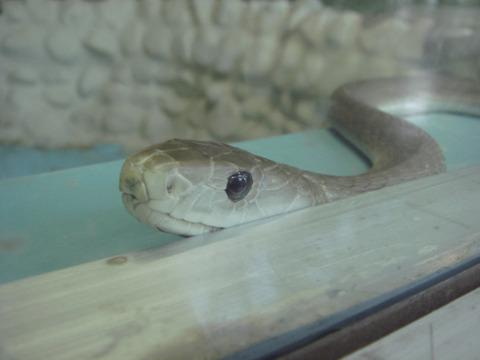 20110918-snakecenter14