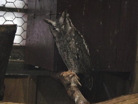 20110808-owl03