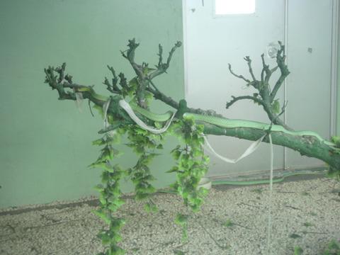 20110918-snakecenter12