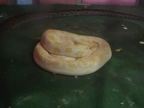 20110918-snakecenter25