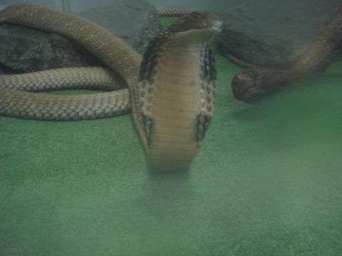20110918-snakecenter09
