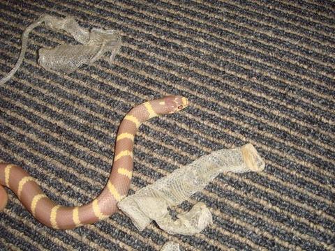 20100912-snake6