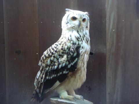 20110808-owl09