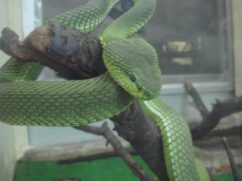 20110918-snakecenter06