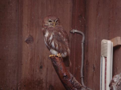 20110808-owl08