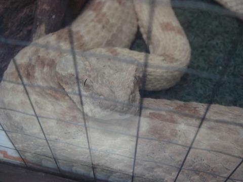 20110918-snakecenter05