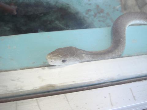 20110918-snakecenter15
