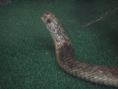 20110918-snakecenter08