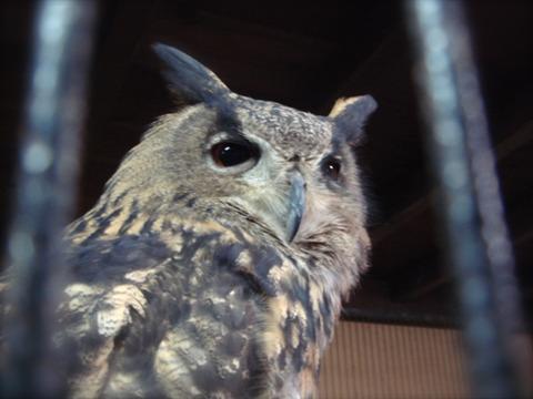 20110808-owl07