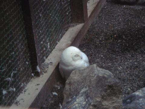 20110808-owl18