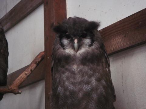 20110808-owl01