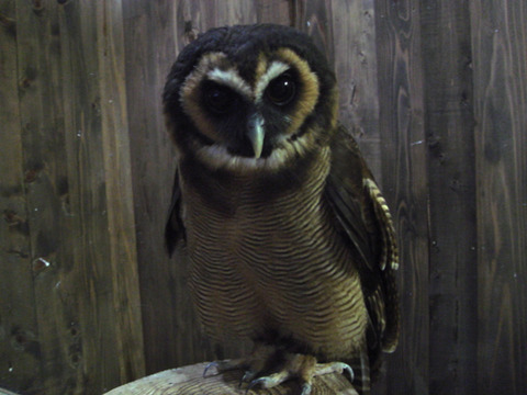 20110808-owl04