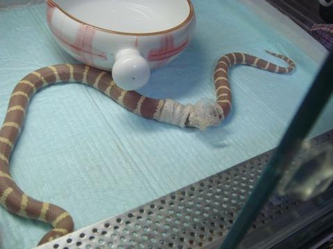 20100912-snake5