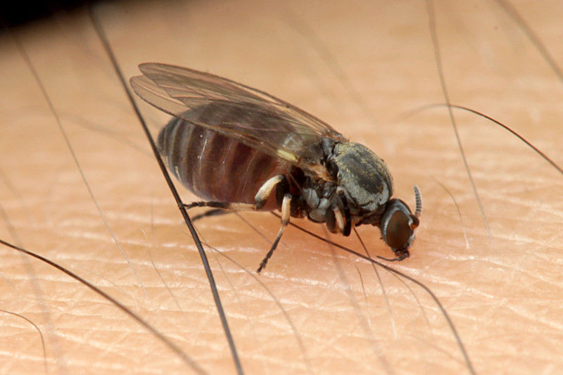 違い 蚊 ブヨ