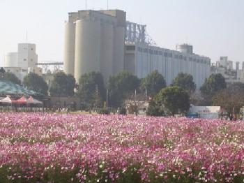 kosumosu