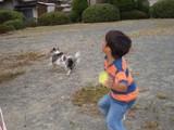 ボール取ってこい