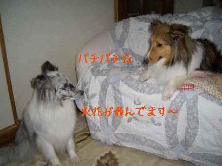ジナ&みんと3