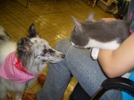 みんと&猫