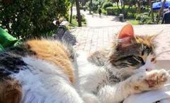 トルコで日本人男性「猫食べた」動物愛護法違反で罰金処分