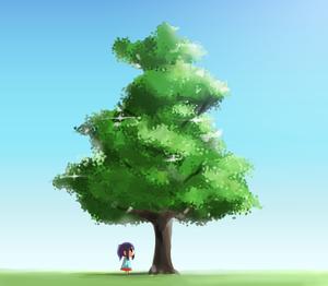 2011-11-20 樹木B