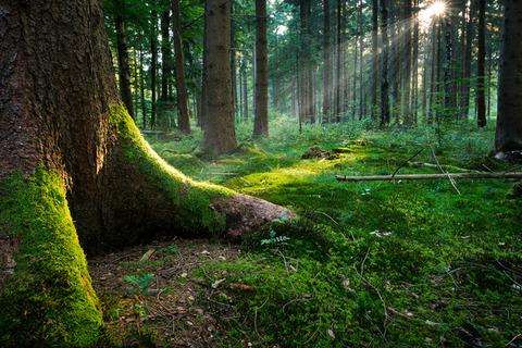 fairytale-forest-ground-1337162-639x426