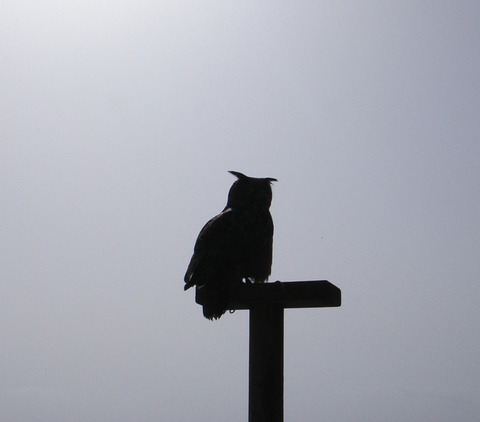 owl-silhouette-1386249-639x561