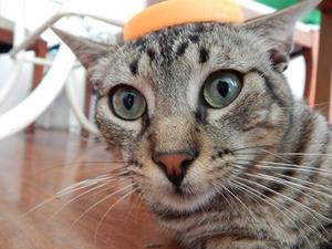 cat-633081_1280
