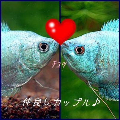 みらい魚2