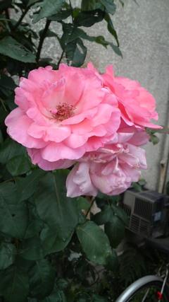 2010、6月 002