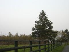 2010 030