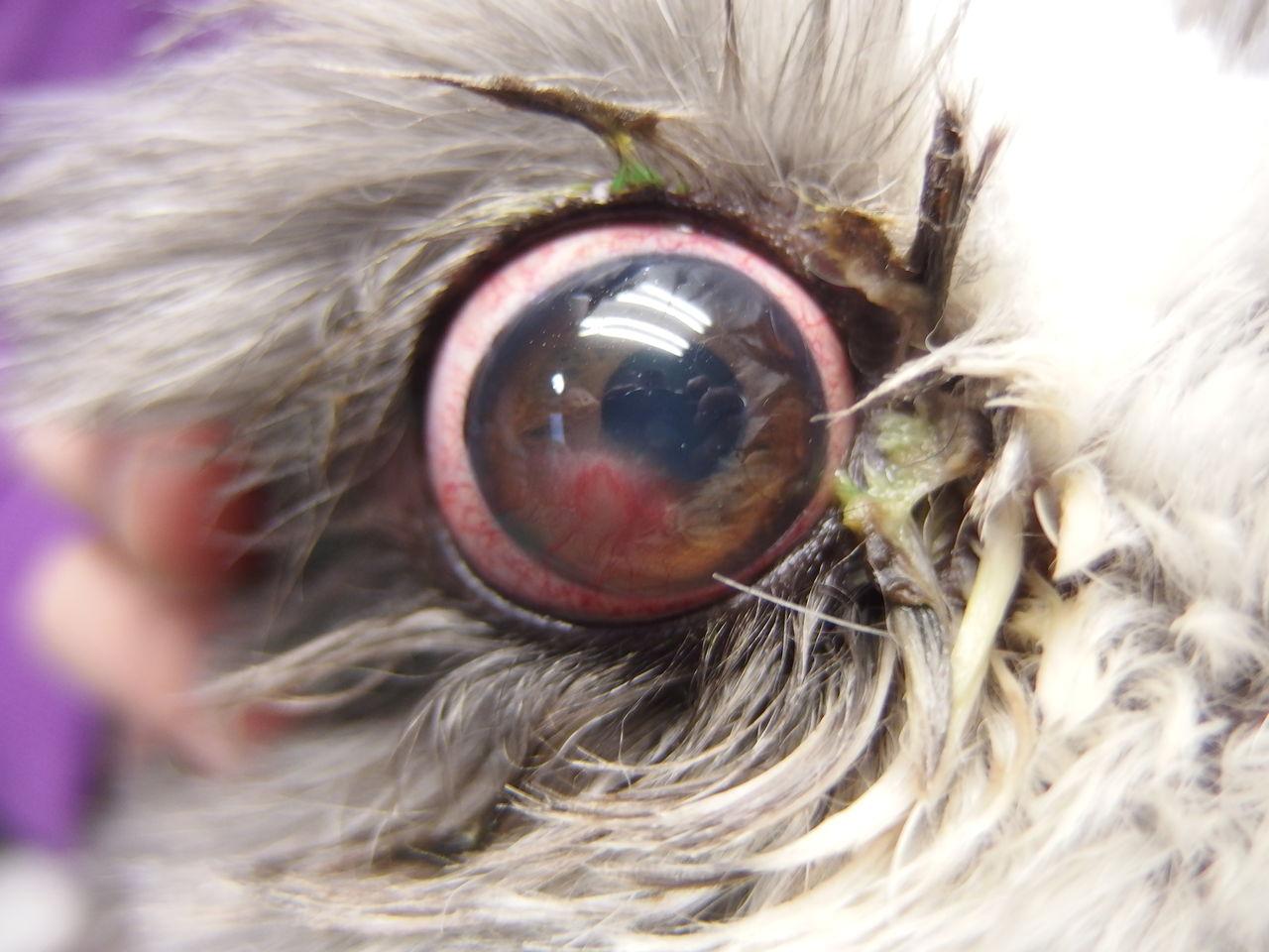 猫の結膜炎は自然治癒可能? - こんにちは。現在2 …