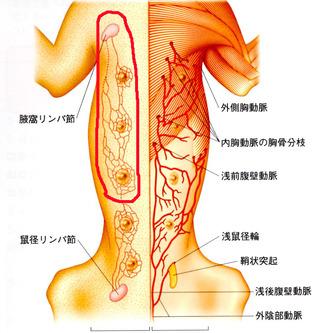 領域乳腺(1~3)