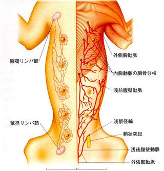 乳腺脈管02