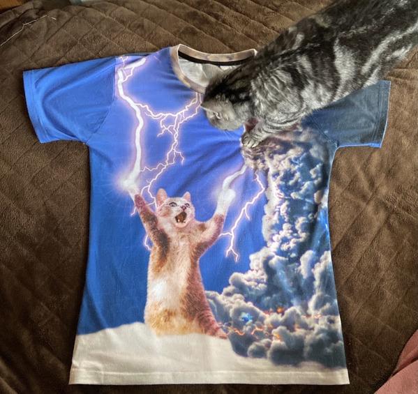 Tシャツと猫元画像