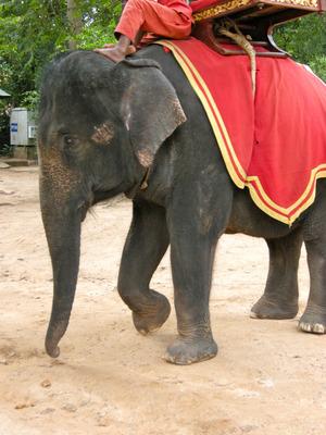 110819カンボジア - 005