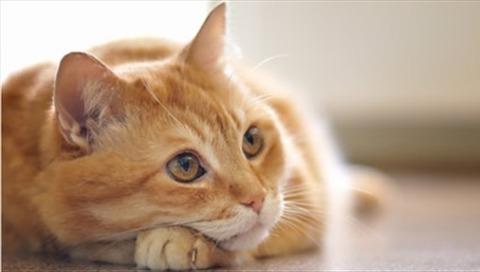 baby-cat2