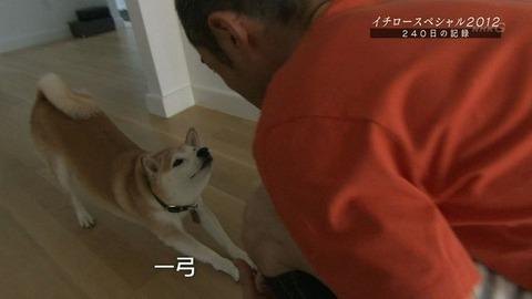 イチロー愛犬-一弓1