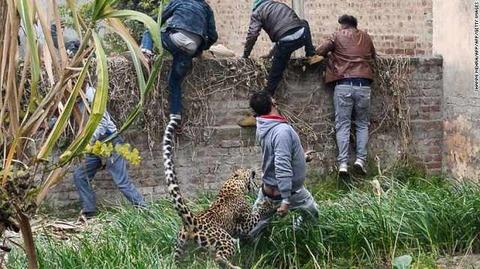 india-leopard-3-exlarge-169