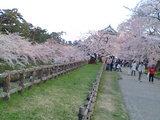 天守閣近くの桜♪