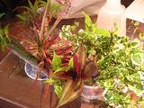 7月ハイドロカルチャー 植物
