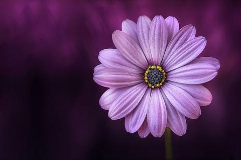 flower-729512__480[1]