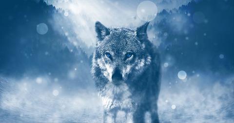 wolf-1836875__480[1]