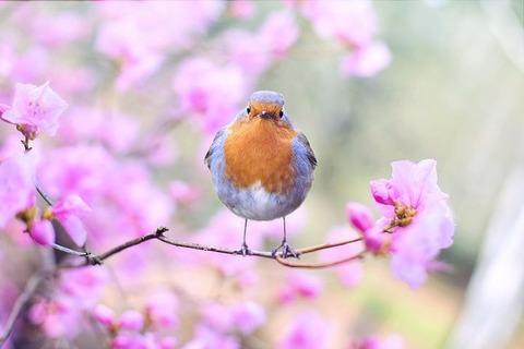 spring-bird-2295436__480[1]